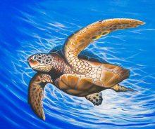 Turtle V